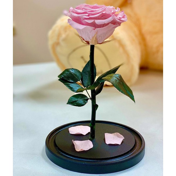 Роза в колбе Премиум