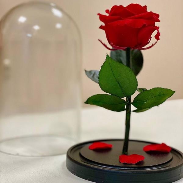 Роза в колбе Стандарт
