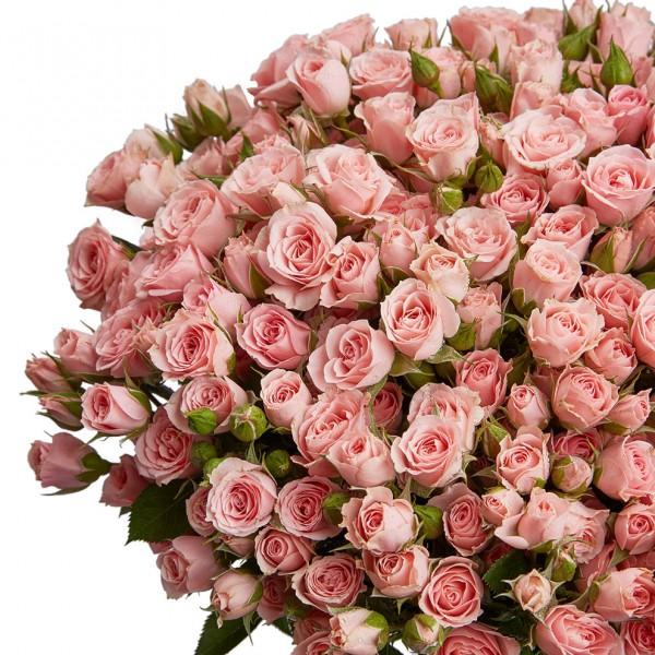 Роза кустовая Tanja