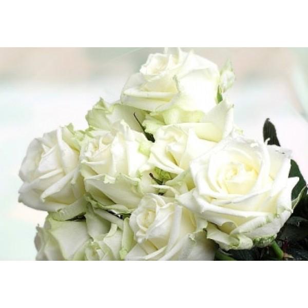 Роза White Naomi