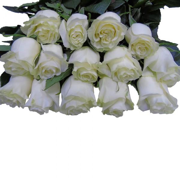 Роза Mondial