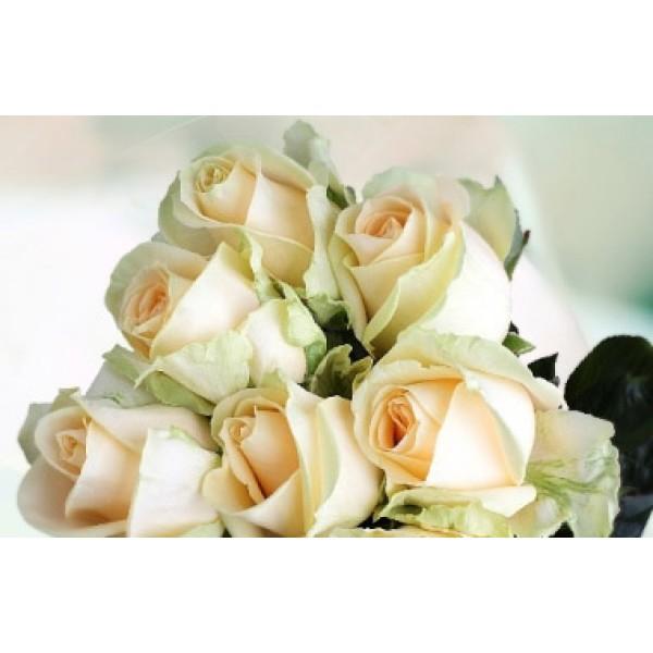 Роза Peach Avalanche